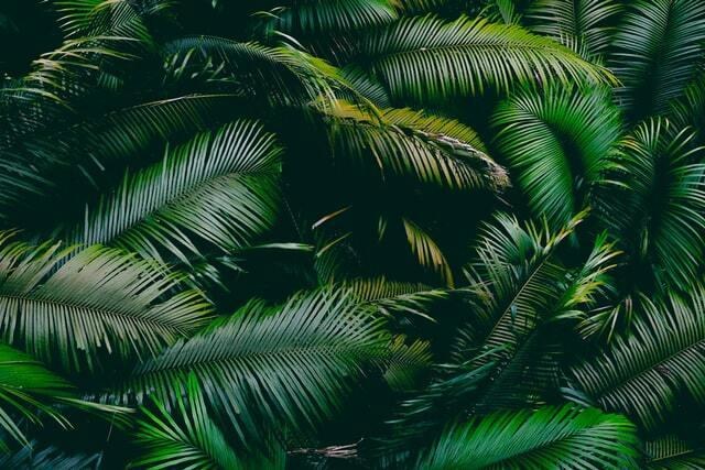 Daintree leaves